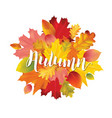 colorful autumn leaves design vector image