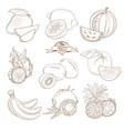 set outline hand drawn fruits with leaves vector image