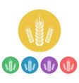 wheat set of colored round icons vector image