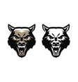 aggressive predatory animal with fangs emblem vector image vector image