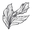 closed bud hibiscus isolated sketch wild vector image vector image
