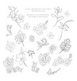 line drawing botanicals flowers plants vector image vector image