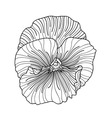Pansy flower drawing