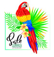 summer sale composition with parrot flowers and vector image