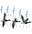 wild geese in flight vector image