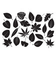 collection black leaves vector image