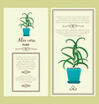 greeting card with aloe vera plant vector image vector image