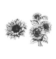 isolated hand drawn sunflowers set vector image