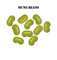 mung beans healthy organic nutrition vector image vector image