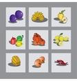 Set fruit vector image vector image