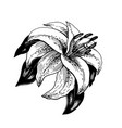 sketch of a flower with leaves vector image