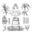 sugar cane sketch vector image vector image