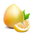whole pomelo and slice vector image vector image