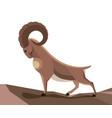 wild mountain goat vector image vector image