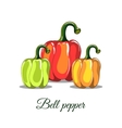 Colorful Bell Peppers vector image