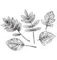 hand drawing leaves 8 vector image vector image