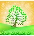 Summer Green Tree vector image vector image