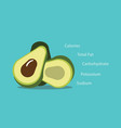 avocado nutrition element healthy food graphic vector image