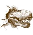 engraving of tyrannosaurus vector image