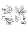 hand drawing leaves 10 vector image vector image