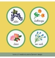 Icons of medicinal plants 2 vector image