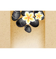 Spa Background with Flowers and Frangipani Flowers vector image vector image