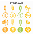Types of grains cereals icons - wheat rye barle vector image vector image
