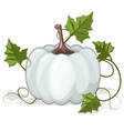 Autumn White Pumpkin Vegetable vector image vector image