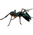cartoon ant warrior vector image vector image