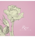 Hand drawn blomming rose with bud Isolated vector image vector image