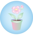 plant flowers in pot on blue background vector image vector image