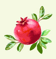 pomegranate with leaves fresh fruit drawing vector image