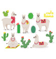 set cute llamas in different poses desert with vector image