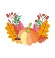 thanksgiving pumpkin acorn leaves foliage on white vector image vector image