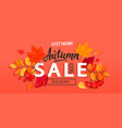 banner for autumn sale with fall leaves vector image vector image