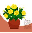 begonia indoor plant in pot banner vector image vector image