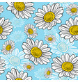 blossoming white daisies on a blue background vector image vector image