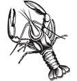 crayfish vector image