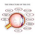 eye map vector image vector image