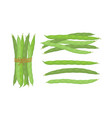 fresh green beans vegetables vector image vector image