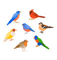a set of birds vector image vector image