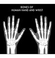 bones human hands and wrists vector image