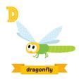Dragonfly D letter Cute children animal alphabet vector image