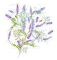 floral with purple blossom mouse peas plant vector image