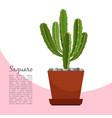 saguaro indoor plant in pot banner vector image vector image