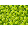 green foliage background vector image vector image