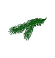 green twig of fir tree with short spines vector image vector image