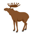 moose animal large deer with palmate antlers vector image vector image