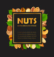 nut banner with kernel and shell sign vector image vector image