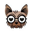 yorkshire terrier wearing eyeglasses fall in love vector image vector image